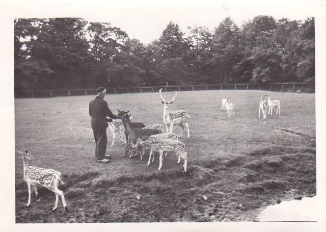 Het hertenkamp in 1954