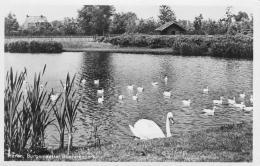 Boeremapark 1947 (ansichtskaart LW Hekkema)