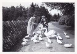 Boeremapark 1952 (foto Odijk - 3)