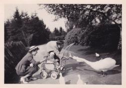 Boeremapark 1952 (foto Odijk - 4)