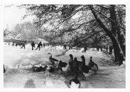 Boeremapark 1979 (foto Odijk - 9)