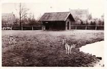 Boeremapark hertenkamp 1947 (foto H Begeman - 1)