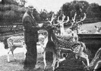 Boeremapark hertenkamp 1974 (verzorger Piet Wolters)