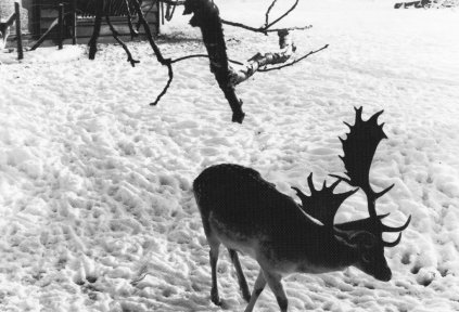 Boeremapark hertenkamp 1979 (foto Odijk - 7)