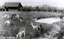 Boeremapark hertenkamp omstreeks 1948 2