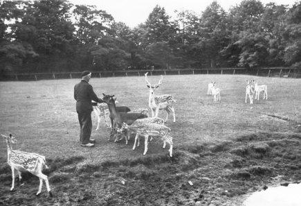 Boeremapark hertenkamp (verzorger Piet Wolters)