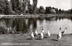 Boeremapark omstreeks 1967